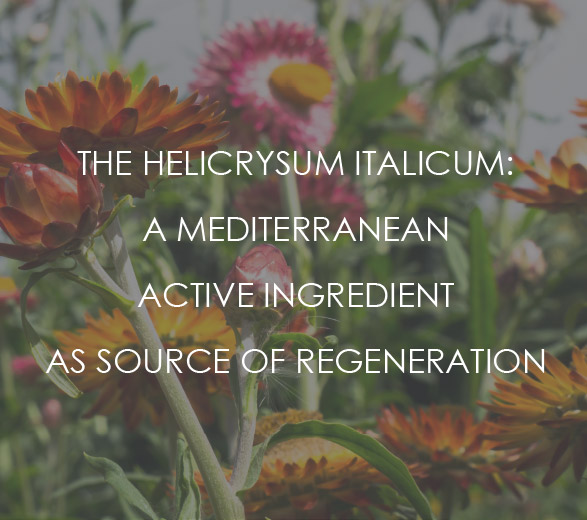 The Helicrysum Italicum: a mediterranean active ingredient as source of regeneration.
